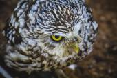 Cute little owl — Stock Photo