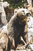 Furry brown bear — Stockfoto