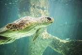 Huge sea turtle underwater — Stock Photo