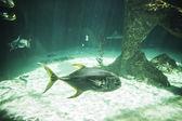 Shark swimming under sea — Stock Photo