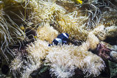 Seabed with fish — Stock Photo