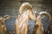 Beautiful group of Spanish ibex — Stock Photo