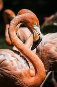 Flamingo head with long neck — Stock Photo