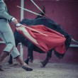 Fighting bull picture from Spain. — Stock Photo #63765727