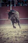 Spectacle of bullfighting — Stock Photo