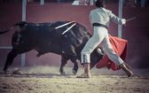 Fighting bull picture from Spain. — Stock Photo
