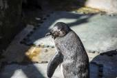 Funny penguin sun in a peer group — Stockfoto