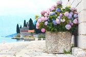Flowers on sea berth — Stock Photo
