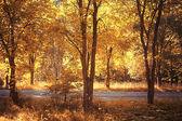 Birch trees trail — Stock Photo