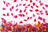 Flying red petals — Stock Photo