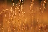 Atardecer en el campo de hierba — Foto de Stock