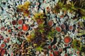 Mold fungi — Stock Photo
