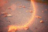 Las hojas de otoño sobre asfalto — Foto de Stock