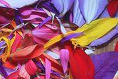 Multicolored flower petals — Stock Photo
