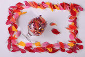 Flower petals in glass — Stock Photo