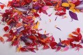 Frame of flower petals — Stock Photo