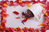 Flower petals in cup — Stock Photo