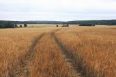 Road by a wheat field — Stock Photo