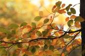 Autumn leaves on branch — Foto Stock