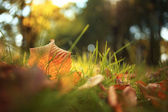 Autumn leaves in grass — Stock Photo