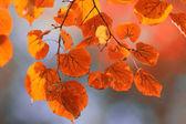 Autumn linden leaves — Stock Photo