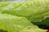 Salad leaves background — Stock Photo