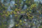 Větve s mladými listy — Stock fotografie