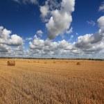Hay rolls on field — Stock Photo #56029819