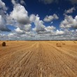 Hay rolls on field — Stock Photo #56029919