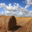 Hay rolls on field — Stock Photo #56030215