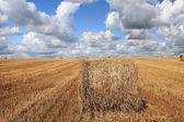 Hay rolls on field — Stock Photo