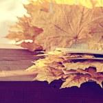 Autumn book — Stock Photo #59999467