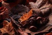 Autumn leaves — Stock fotografie