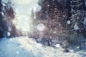 Magical winter forest — Stock Photo