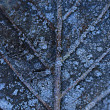 Frozen leaf — Stock Photo #60002025