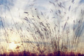 Dry grass background — Stock Photo