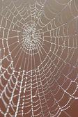 Spider background — Stock Photo