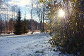 Autumn snowy park — Stock Photo