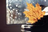 Autumn typewriter — Stock Photo