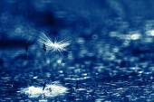 Abstract dandelion fluff background — Stock Photo