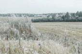 Winter field and forest — Stock Photo