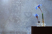Blue crocus flowers on book — Stock Photo
