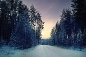 Winter pine forest — Stock Photo
