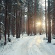 Pine forest in winter — Stock Photo #67910683