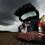 Photographer traveler in car — Stock Photo #67977513