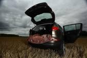 Suv car in field — Fotografia Stock