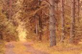 The path in the autumn forest — Stock Photo