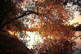 Желтый осенний фон — Стоковое фото