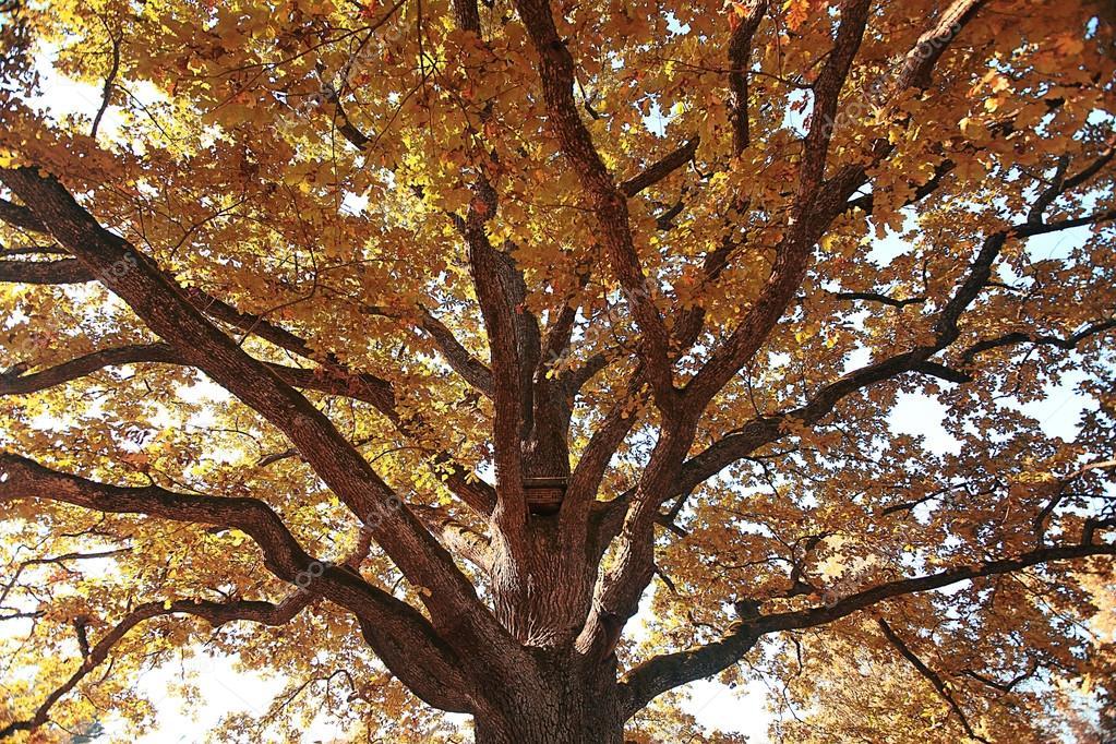 黄色的秋天落叶背景– 图库图片