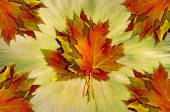 Autumn leaves leafs — Stock Photo